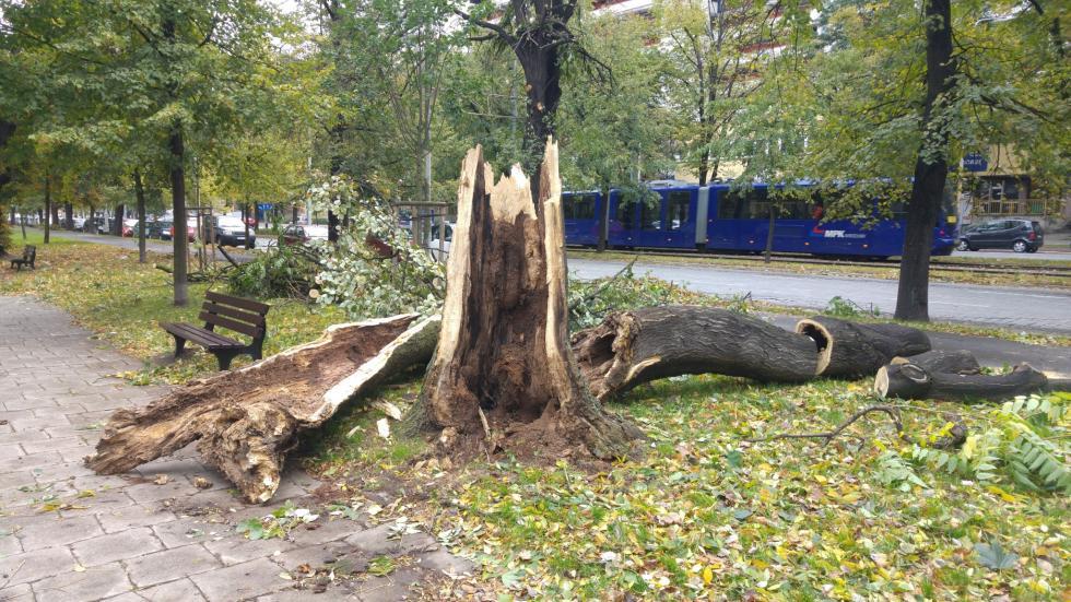 Co zrobić, kiedy drzewo przewróci wichura?