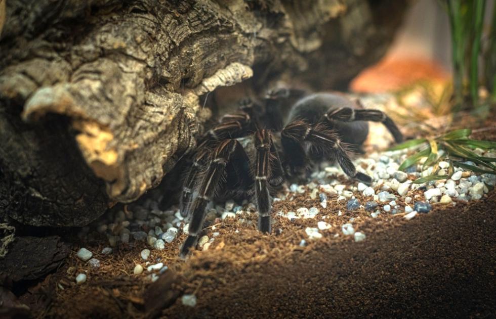W Sky Tower znów można podziwiać egzotyczne pająki iskorpiony